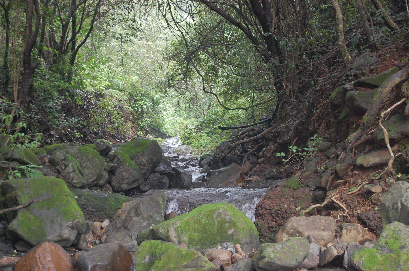 Rain Forest near Nisargshala Campsite