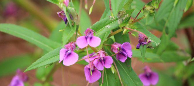 Do Flowers teach us?