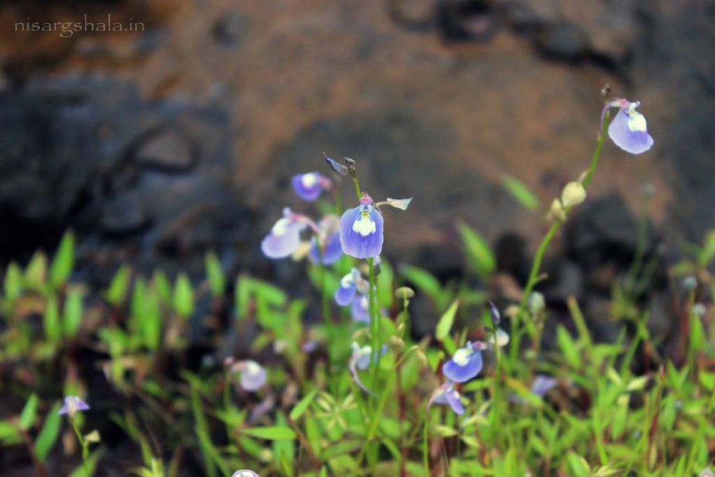 Some unknown flower