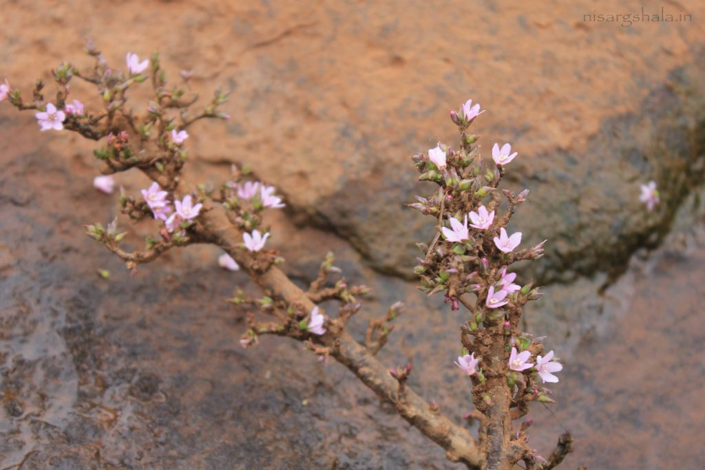 A flowered plant in the water stream
