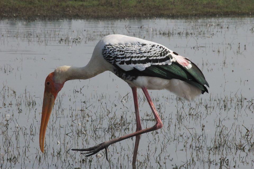 stork edited
